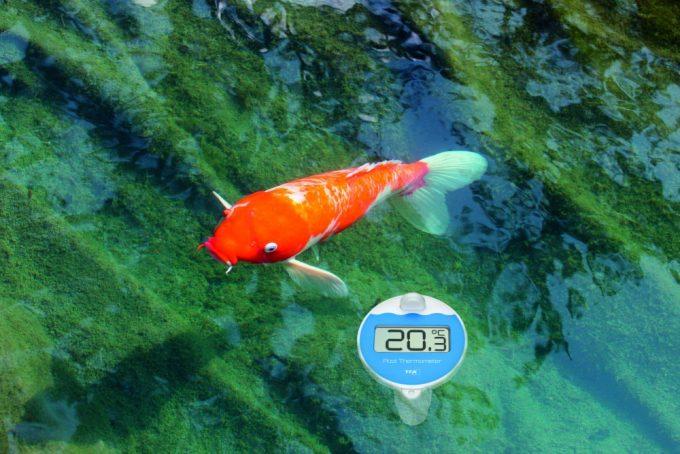 Bezdrôtový bazénový teplomer TFA 30.3066.01 MARBELLA